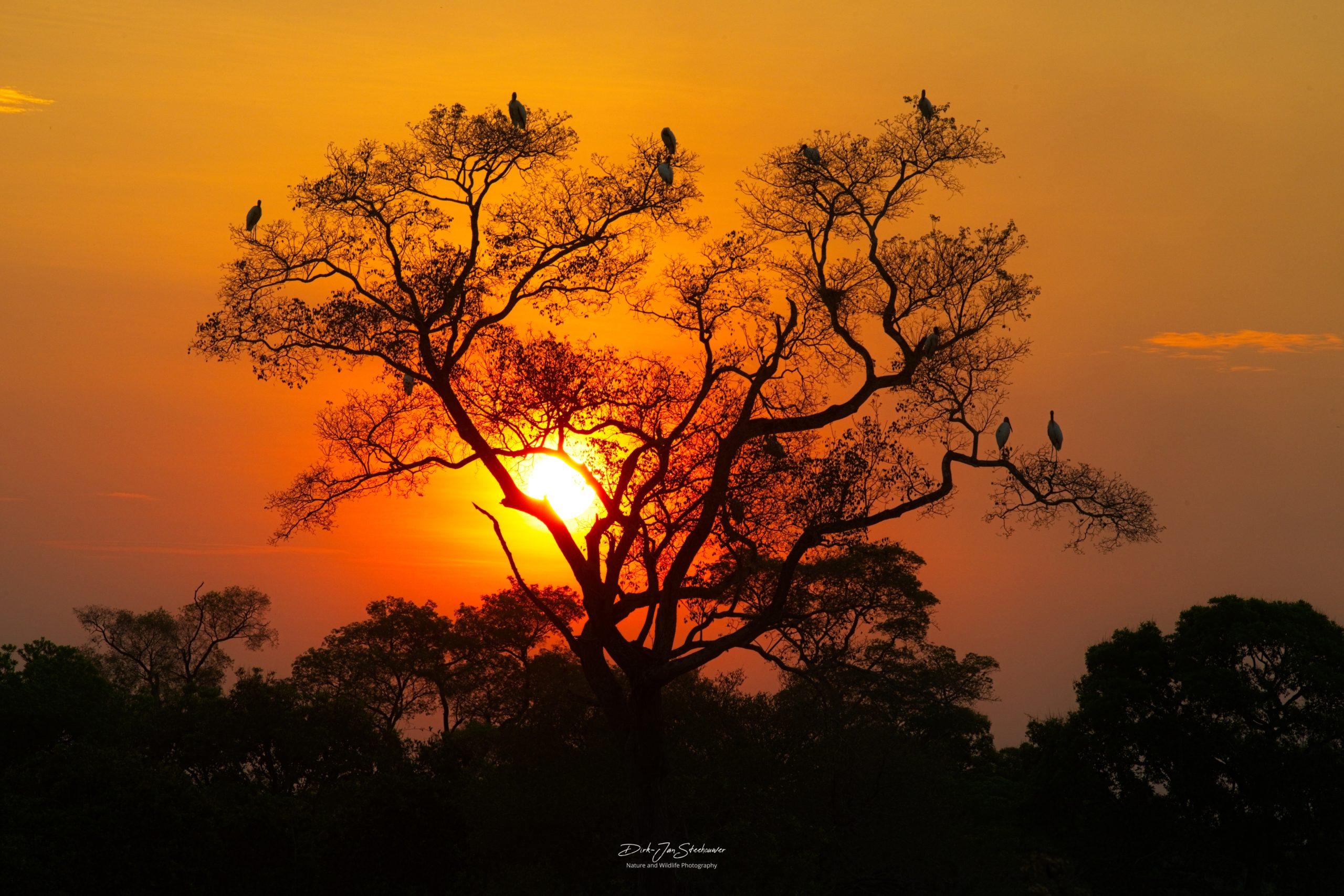 Zonsondergang fotoreis Pantanal