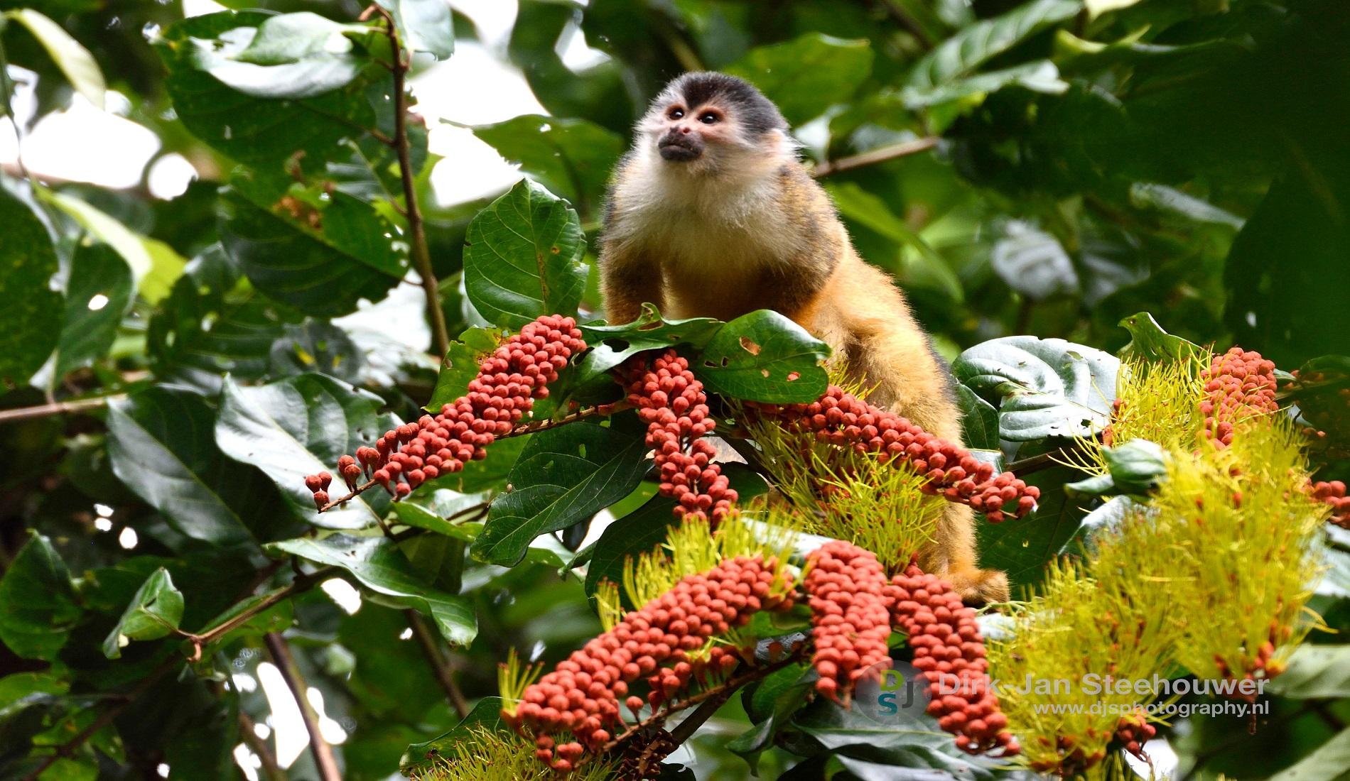 apen nationaal park corcovado