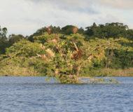 Amazone laguna grande