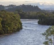 Amazone napo