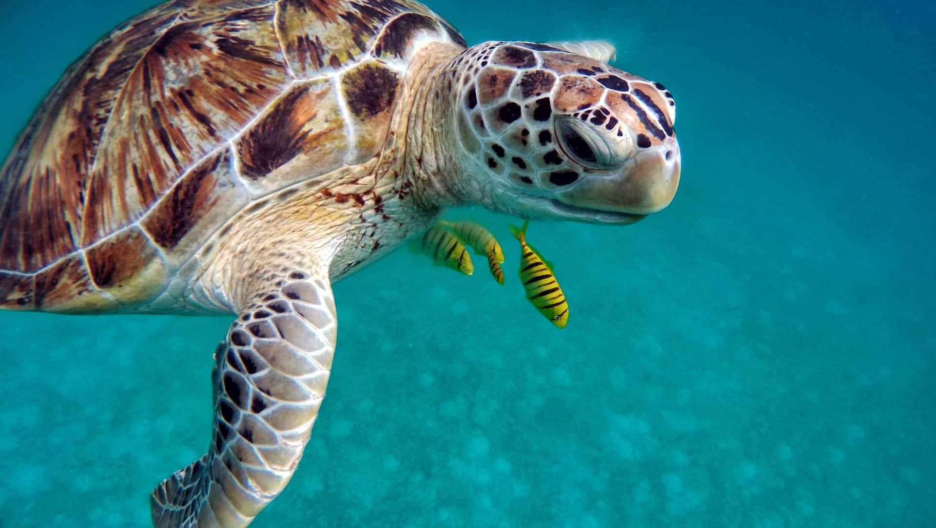 Schildpad Belize reizen