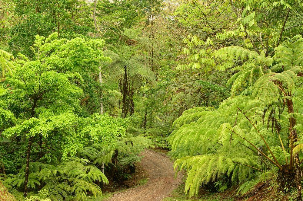 Autorijden door regenwoud naar Costa Rica