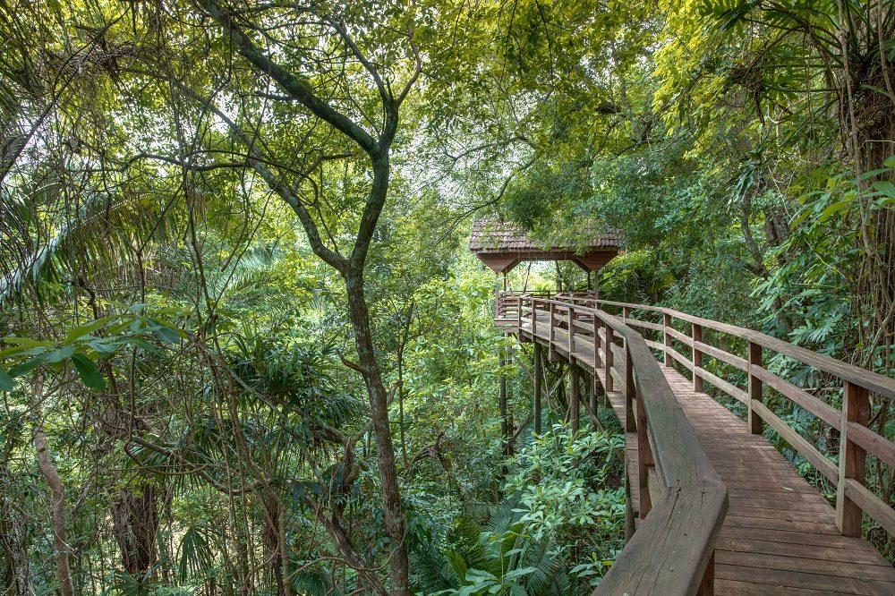 Canopy walk regenwoud familiereis belize