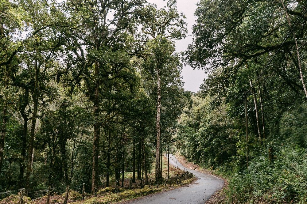 Costa Rica rijden door nevelwoud