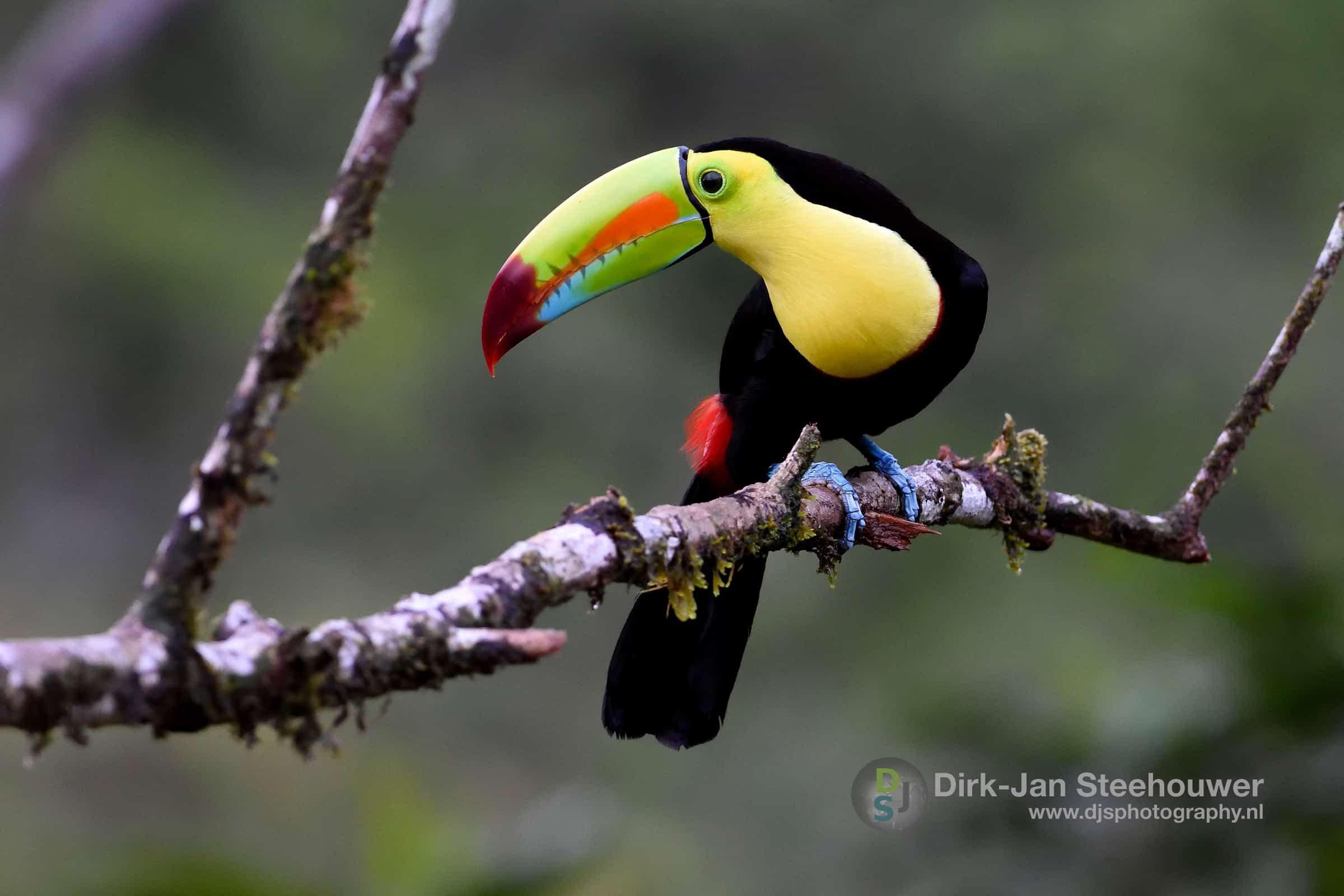 Dieren Costa Rica