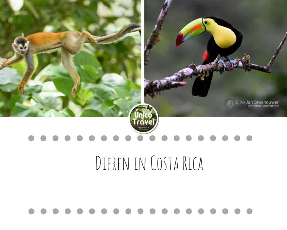 Dieren in Costa Rica