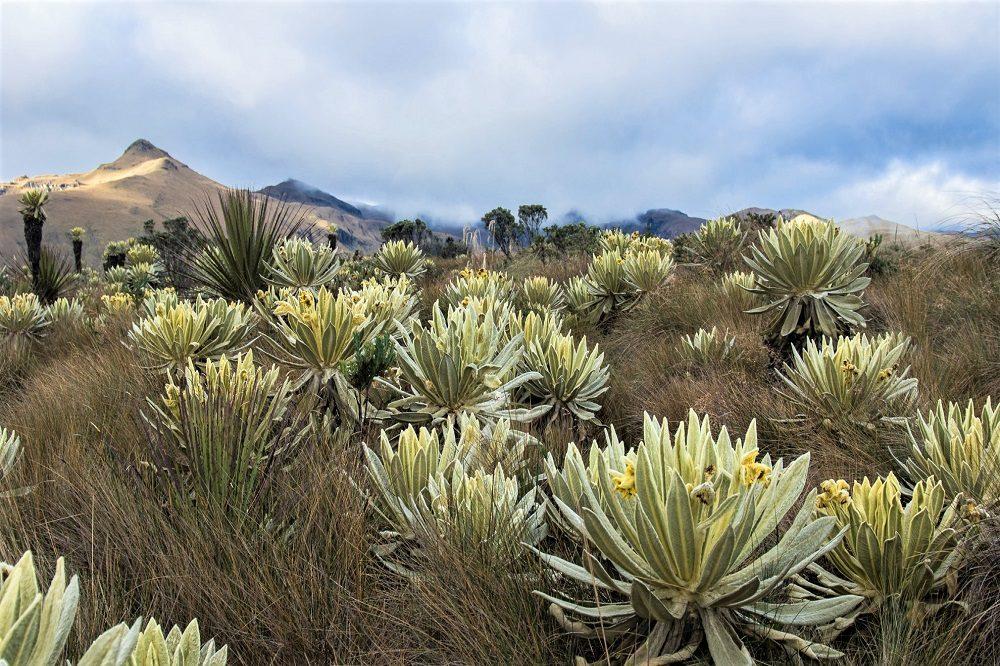 Ecuador reizen El Angel Reserve
