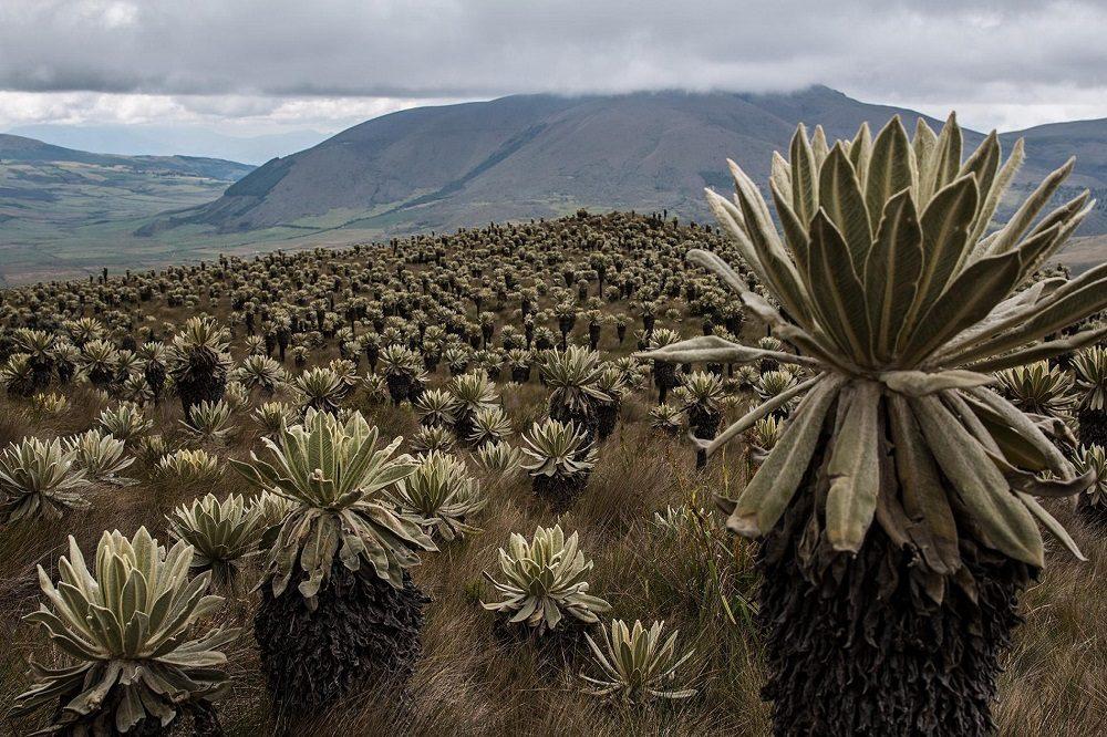 Frailejones rondreis ecuador en galapagos