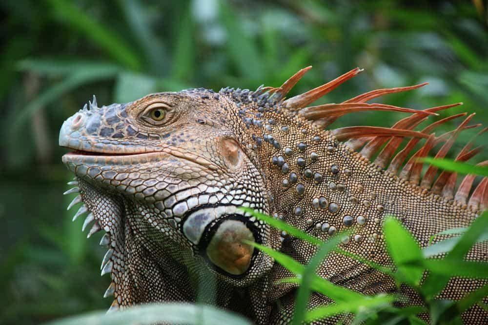 Costa Rica dieren