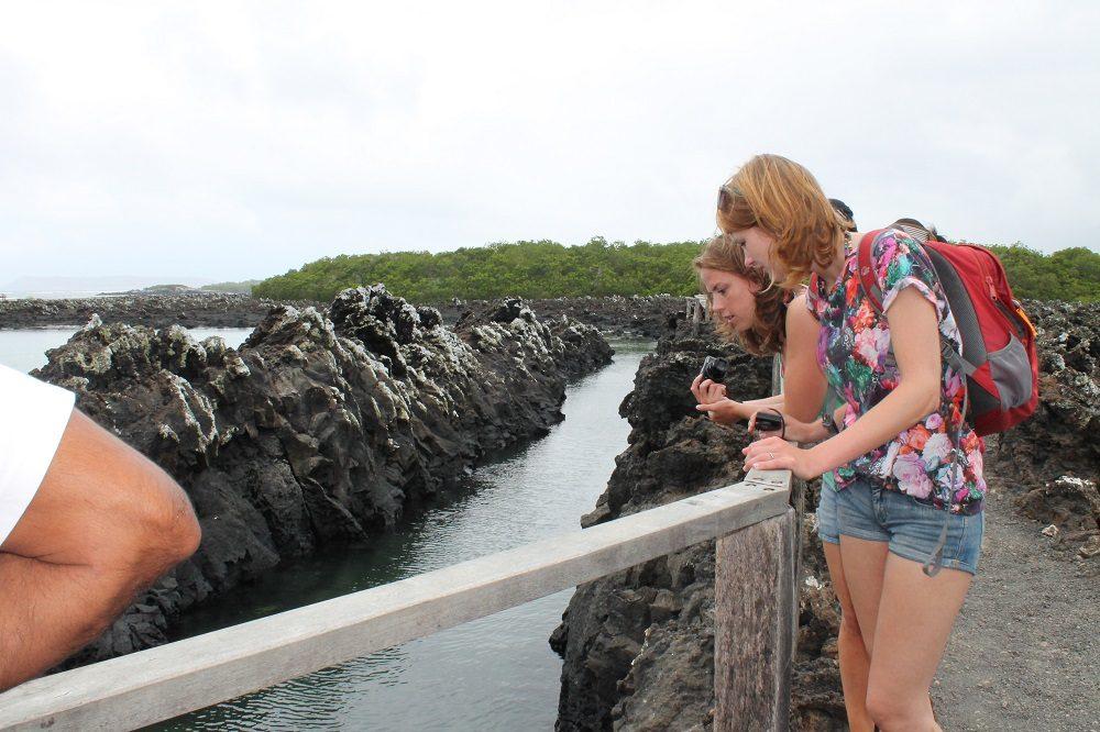 Isabela Tintoreras eilandhoppen galapagos