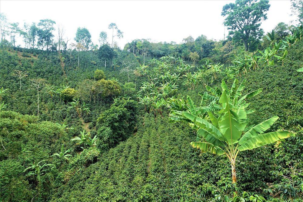 Koffieregio colombia reizen