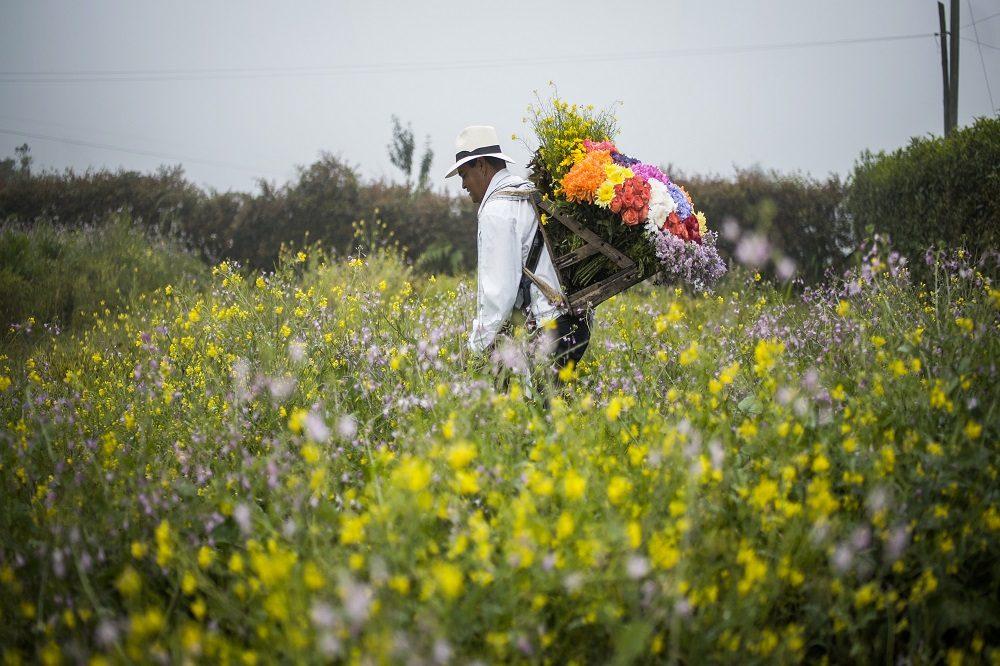 Medellin bloemen (Fotocredits ProColombia)