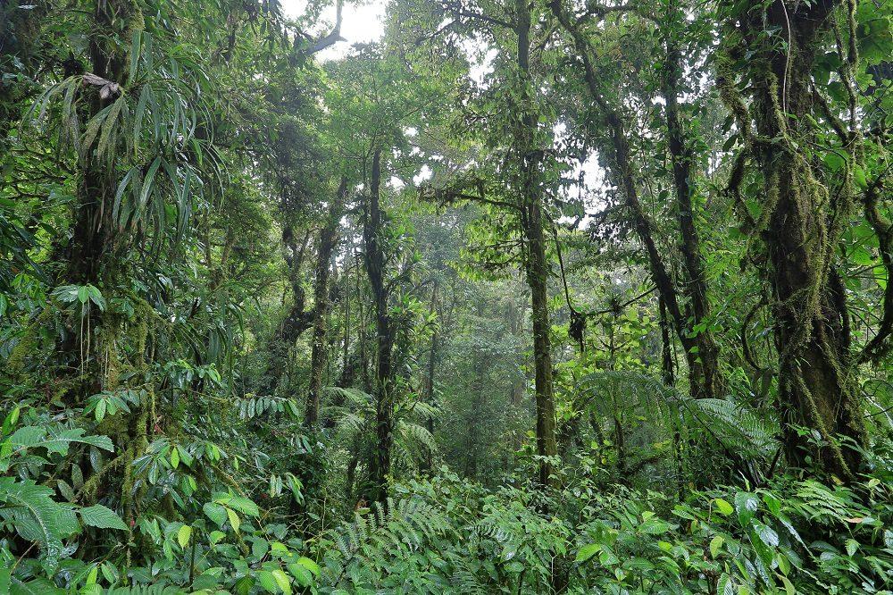 Monteverde Cloudforest Reservewww.destinationphotocostarica.com