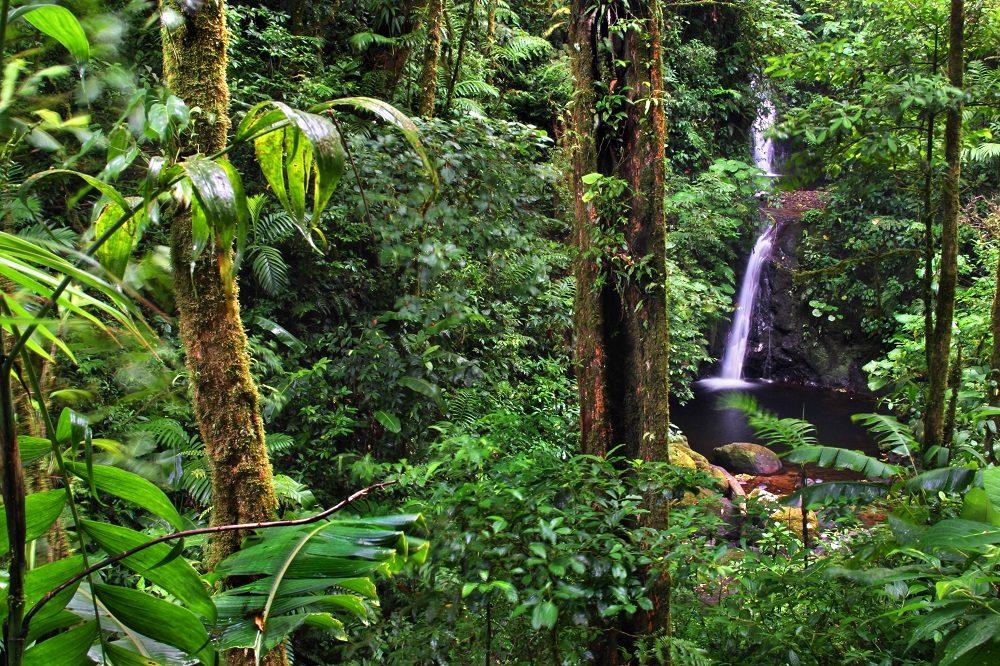 Monteverde cloudforest costa rica