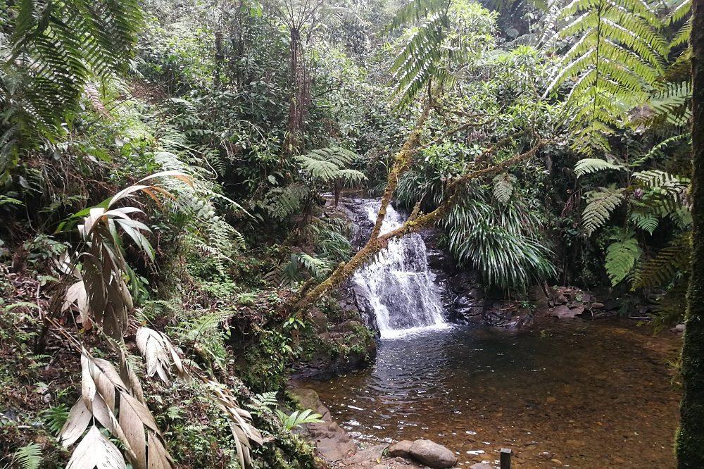 Nevelwoud Guatemala bij Coban