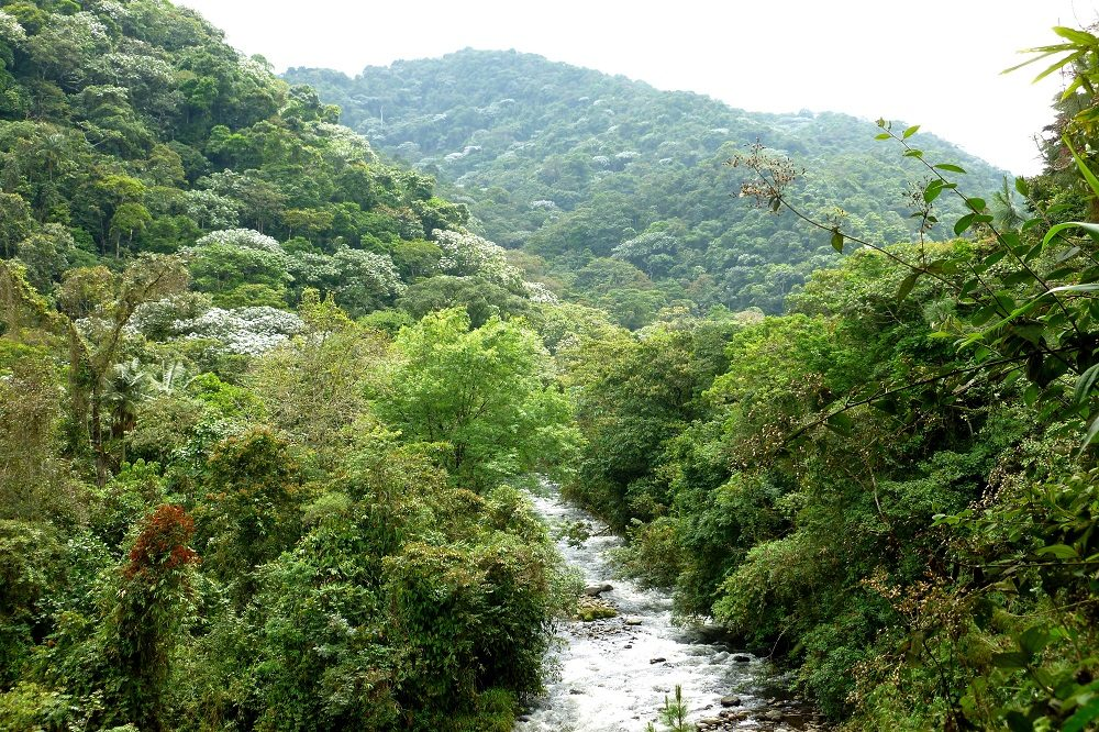 Otun Quimbaya sanctuary colombia