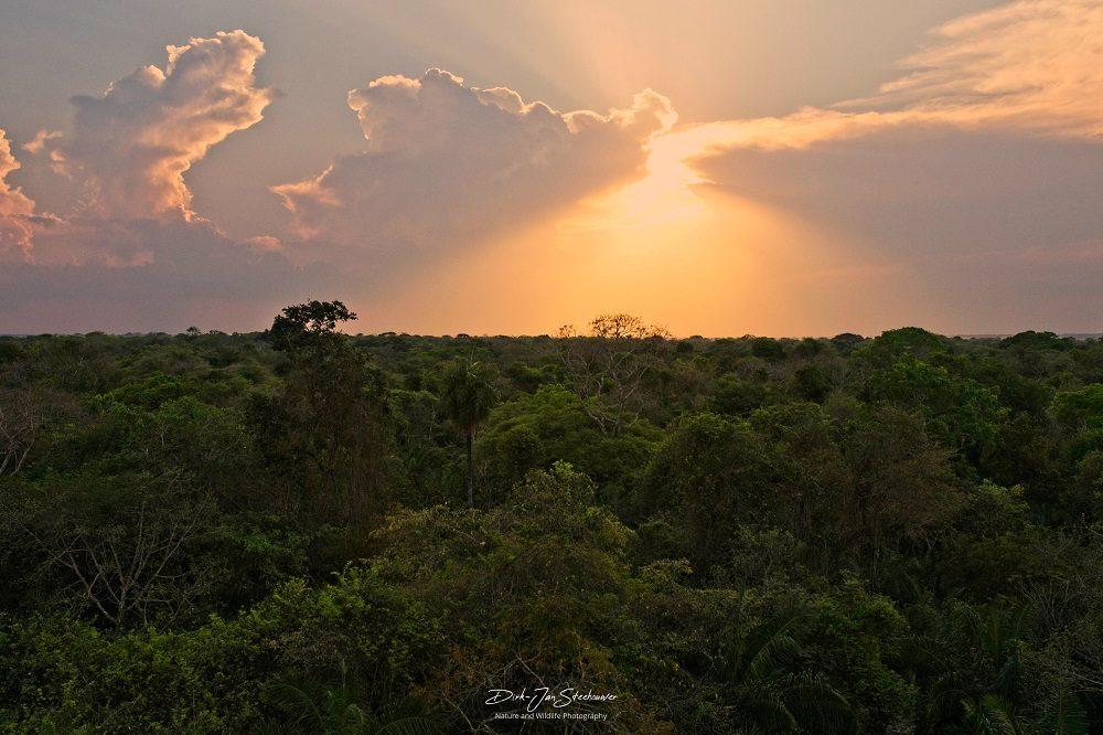 Pantanal landschap