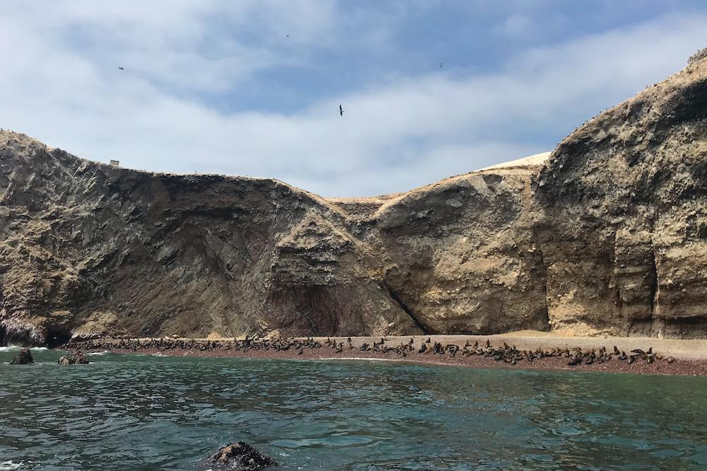 Reisverslag Peru Ballestas eilanden
