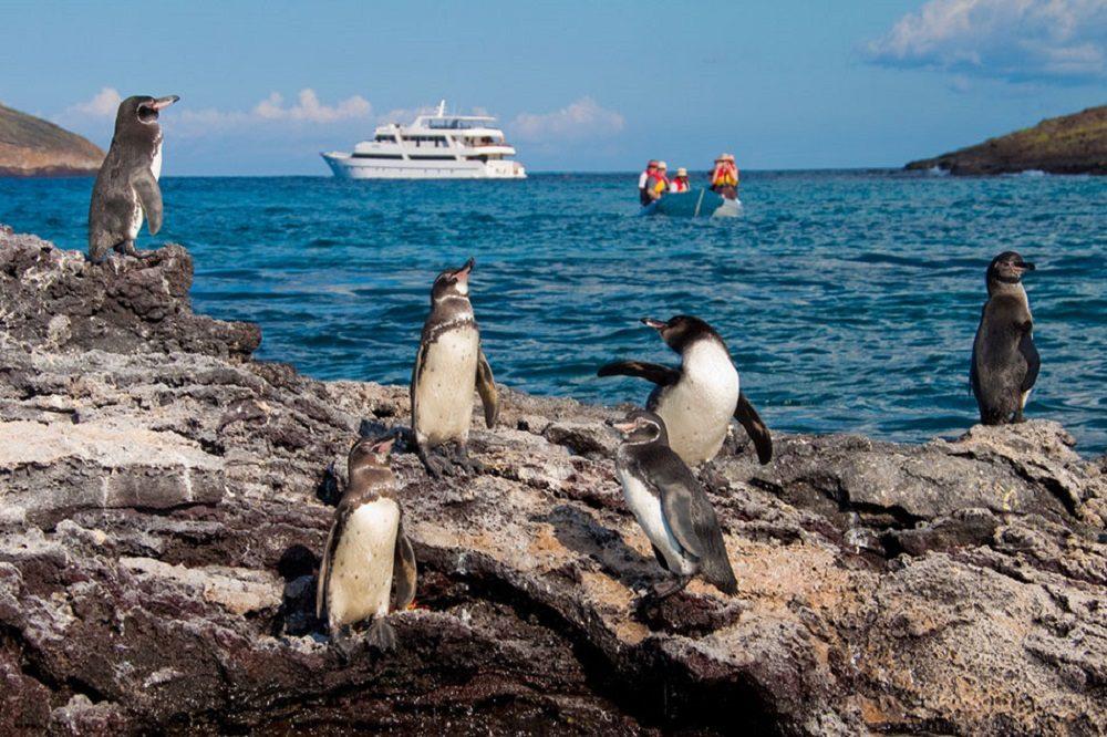 Penguins galapagos