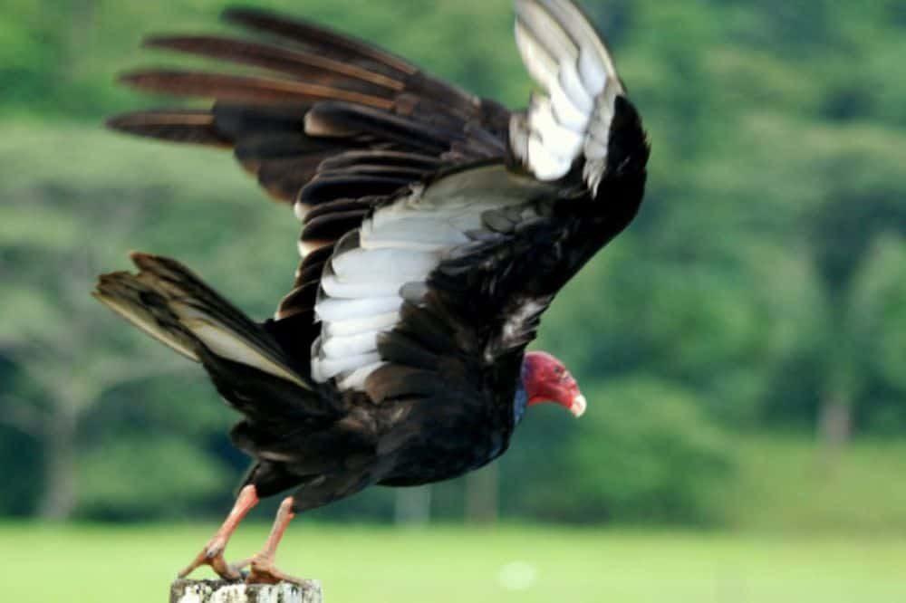 Vogels Costa Rica