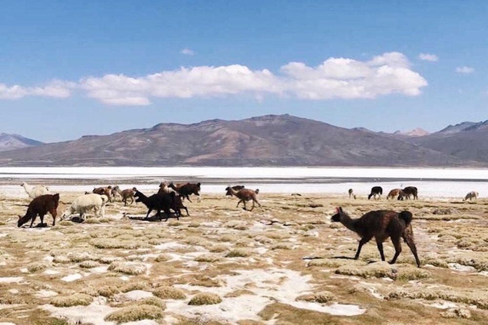 Salineras Arequipa Peru
