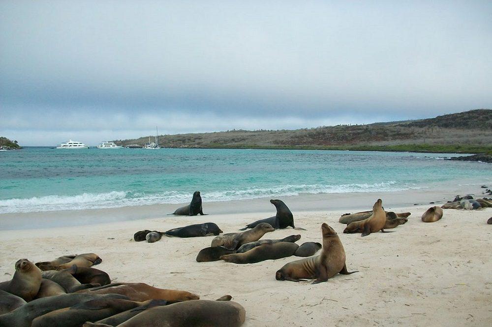 San Cristobal Lobos island duikreis galapagos eilanden
