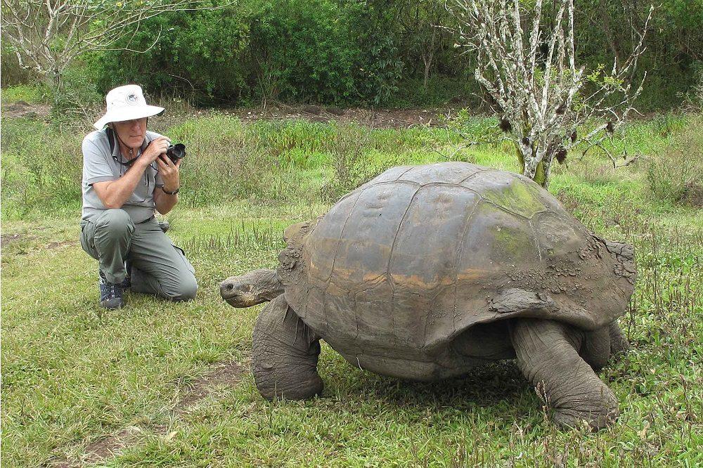 Santa Cruz Highlands giant tortoise