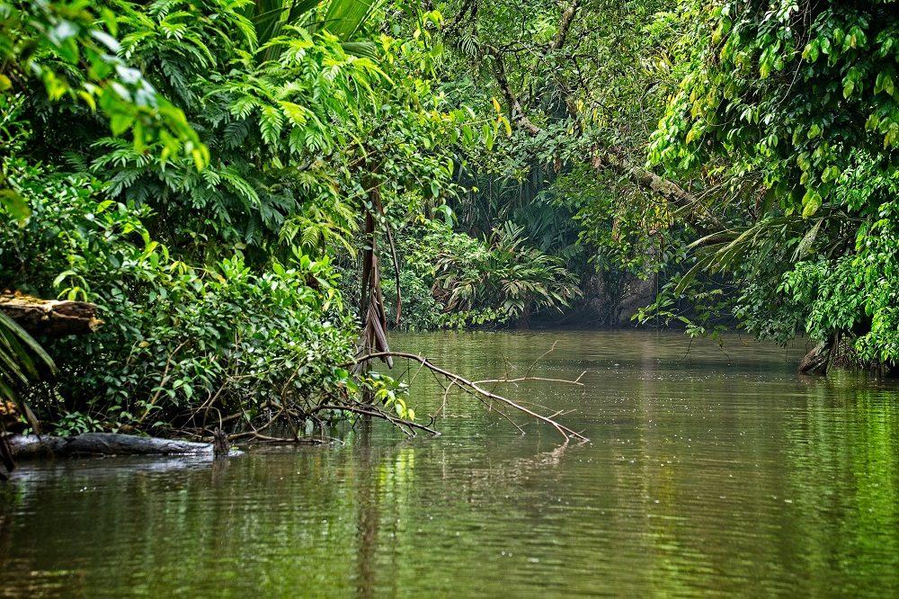 Tortuguero regenseizoen costa rica