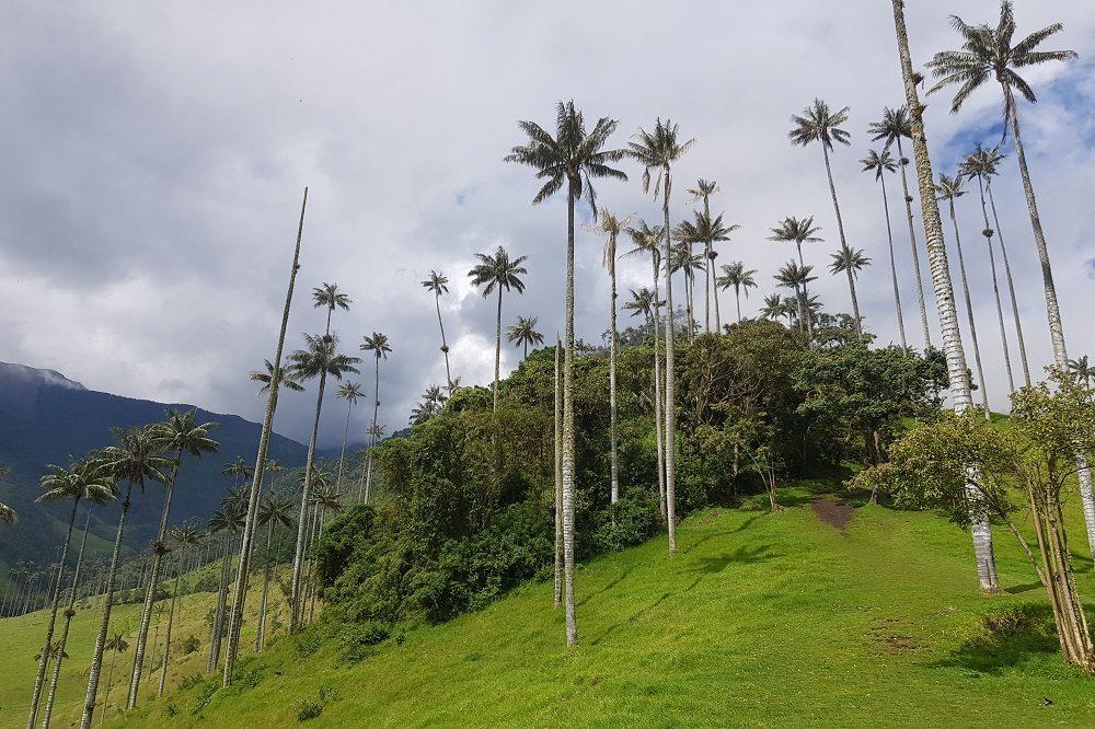reiservaring Colombia Valle de Cocora