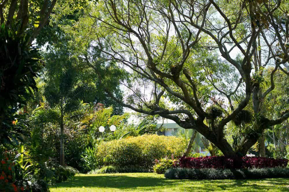 Vogelreis Costa Rica