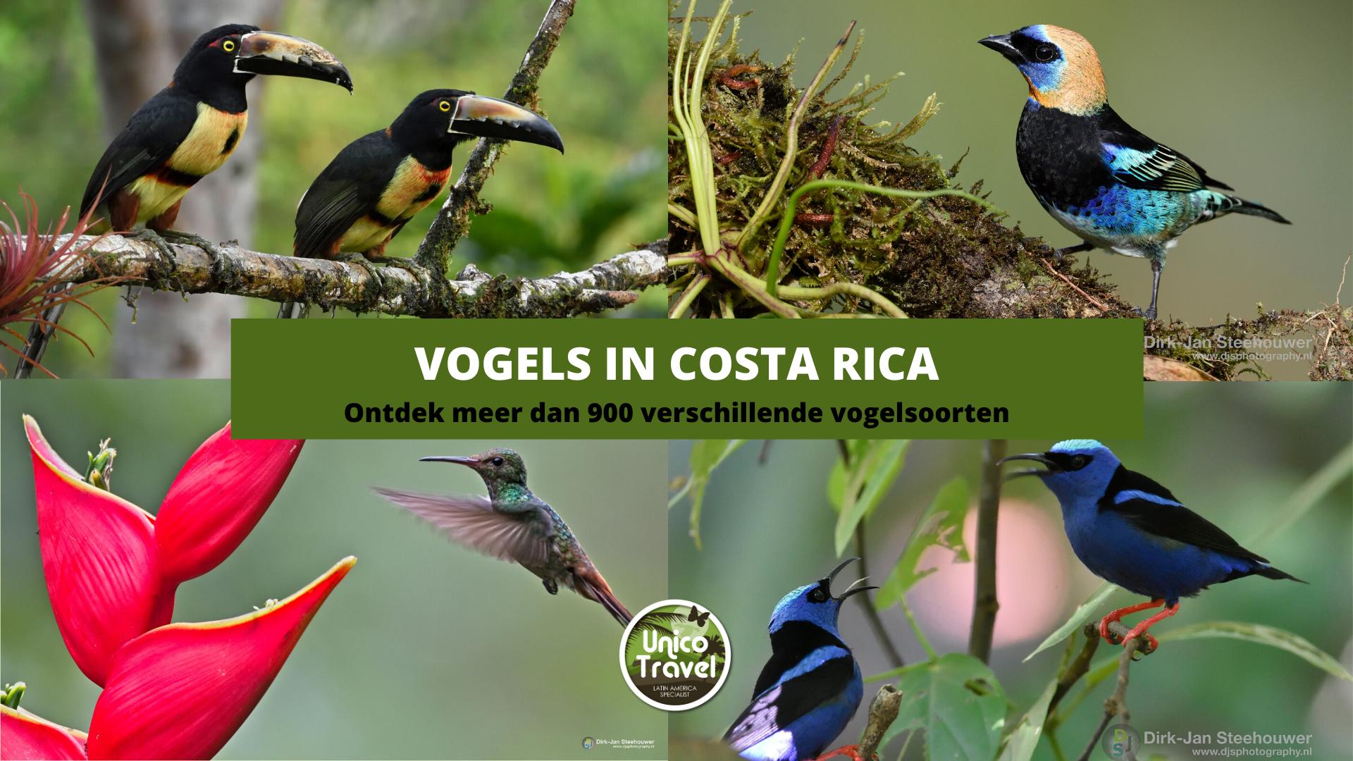 Vogels in Costa Rica