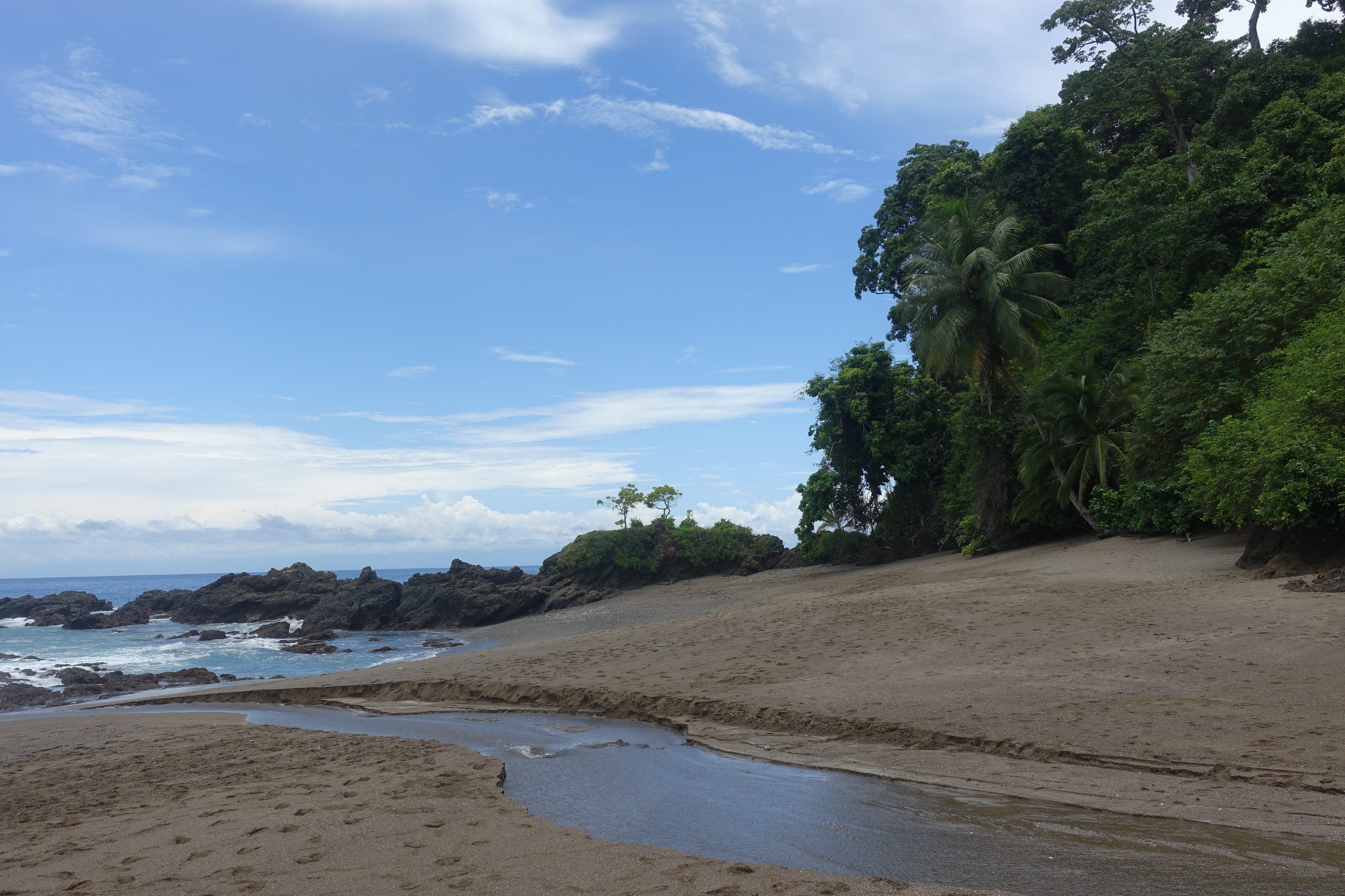 Walvissen Costa Rica