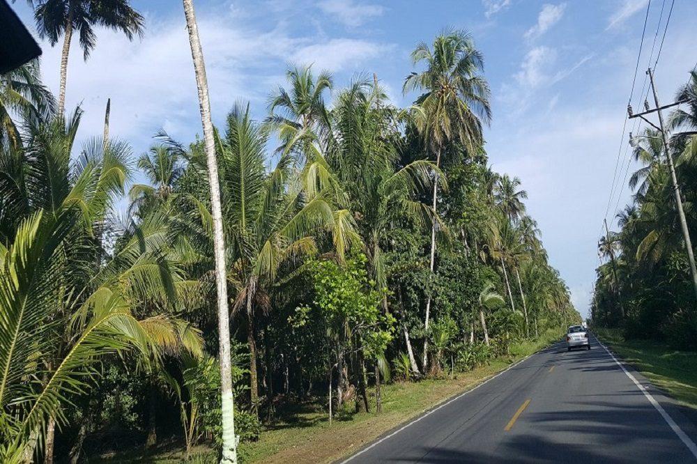 Weg in Costa Rica naar Caribische kust