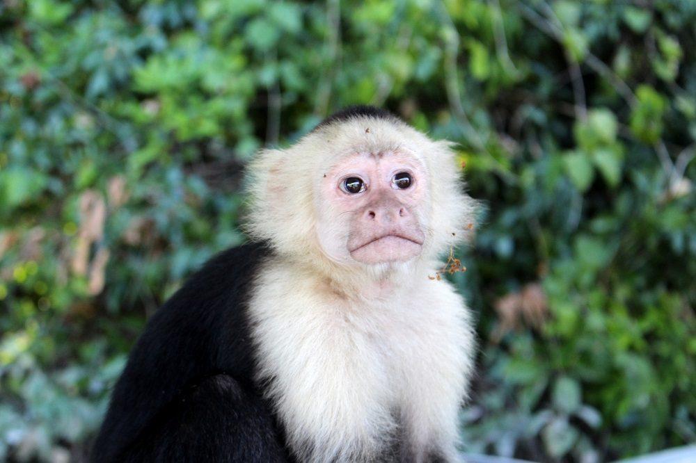 aap in nicaragua