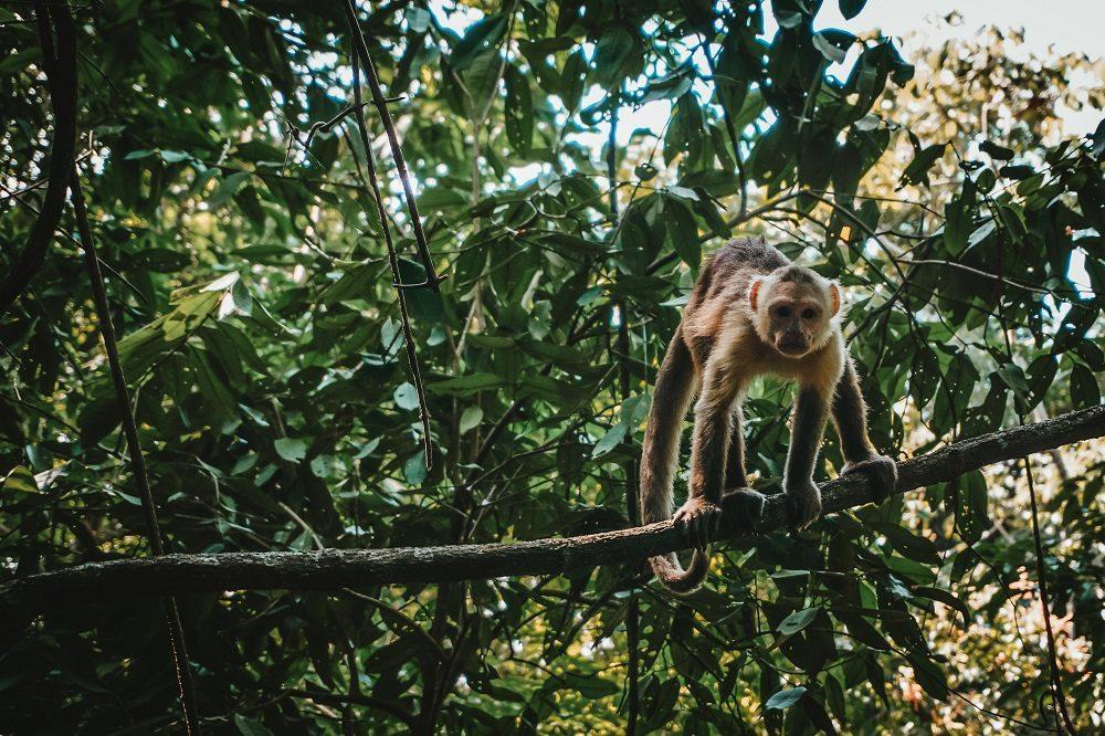 aap tayrona rondreis colombia