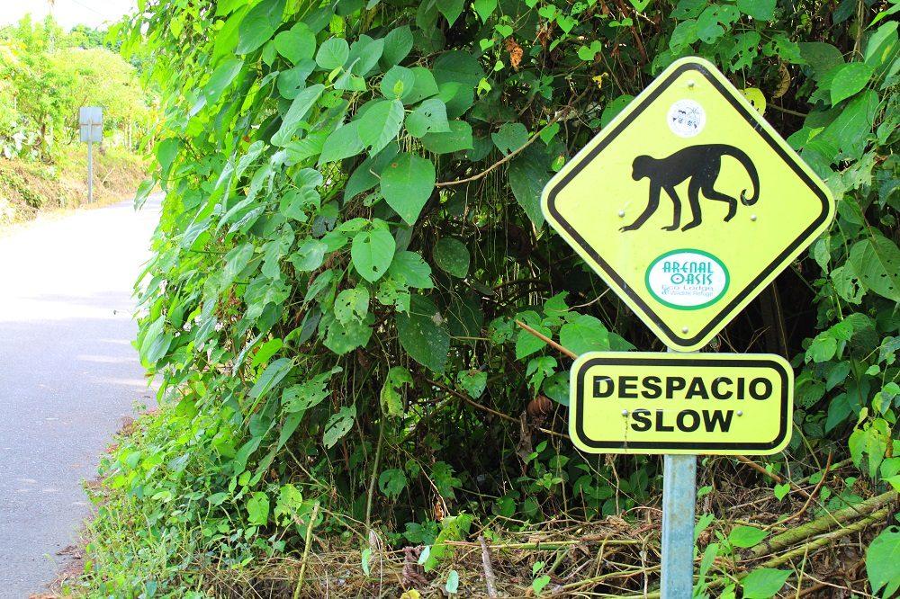 autorijden in Costa Rica overstekende dieren bord