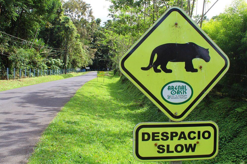 autorijden in Costa Rica overstekende dieren