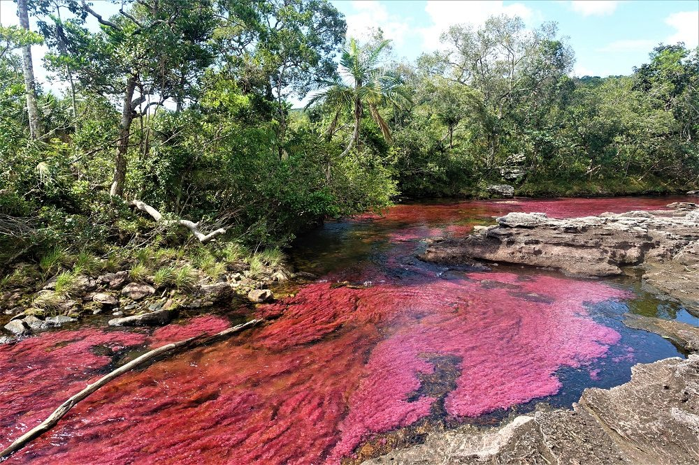 cano cristales rondreis colombia