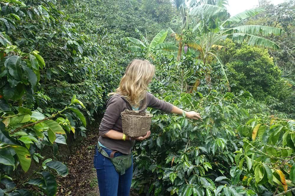 colombia koffieregio