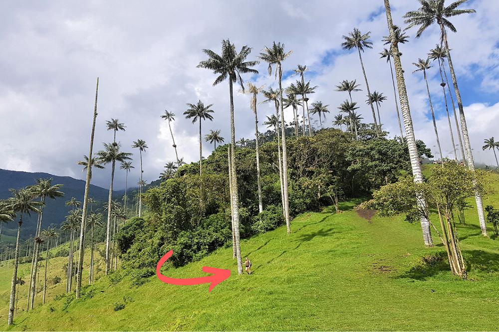 colombia valle de cocora elise