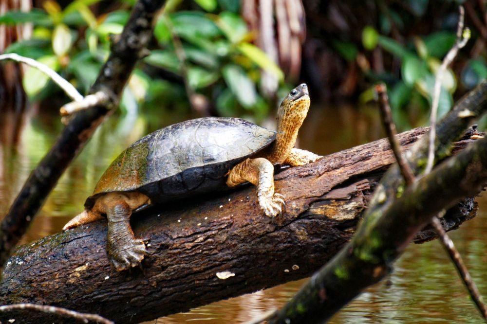 costa rica reizen schildpad