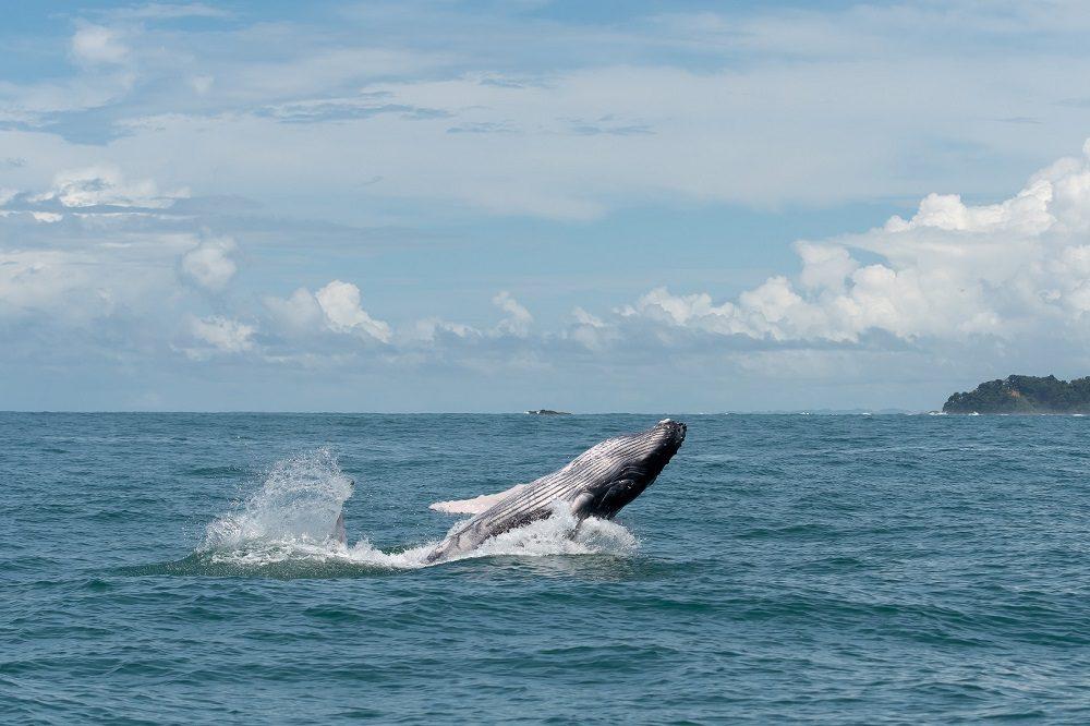 drake bay walvis