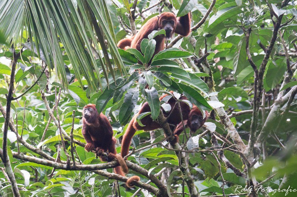 ecuador hoogtepunten amazone apen