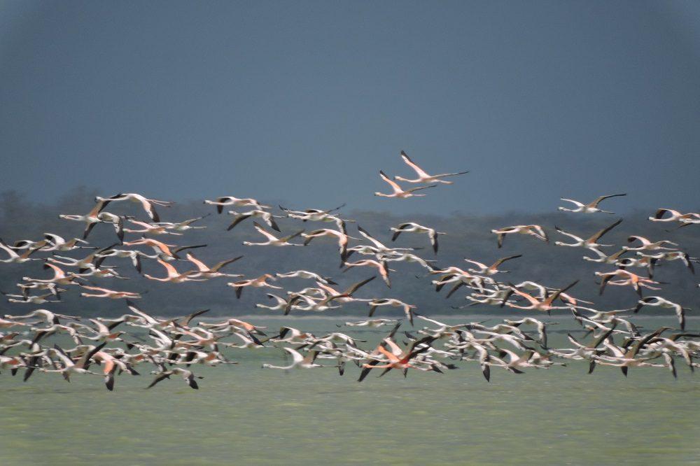 flamingos vogelreis colombia