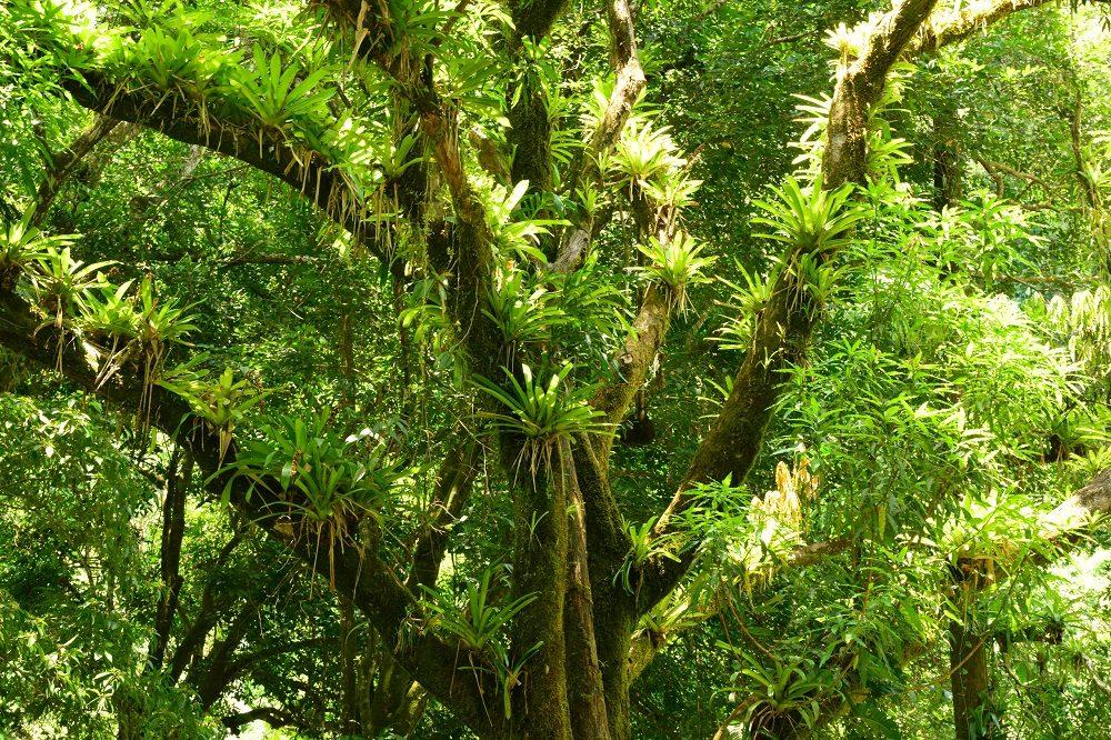jungle regenseizoen costa rica