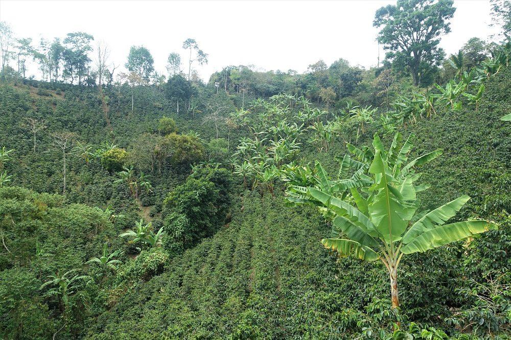 koffie regio colombia