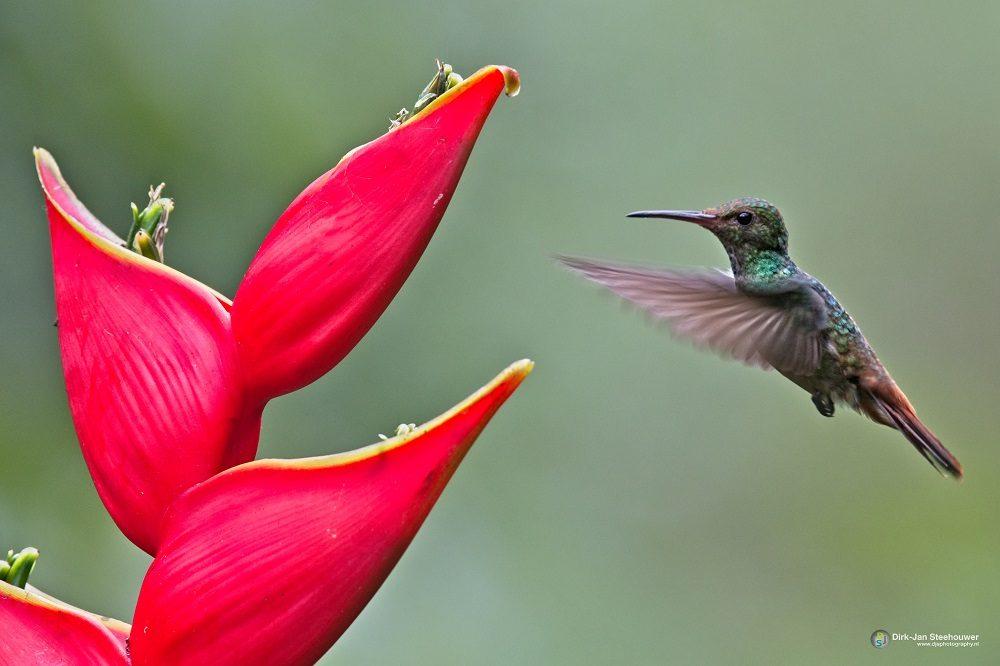 kolibrie vogelreizen