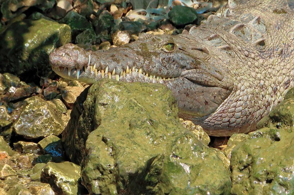 krokodil rondreis chiapas en oaxaca