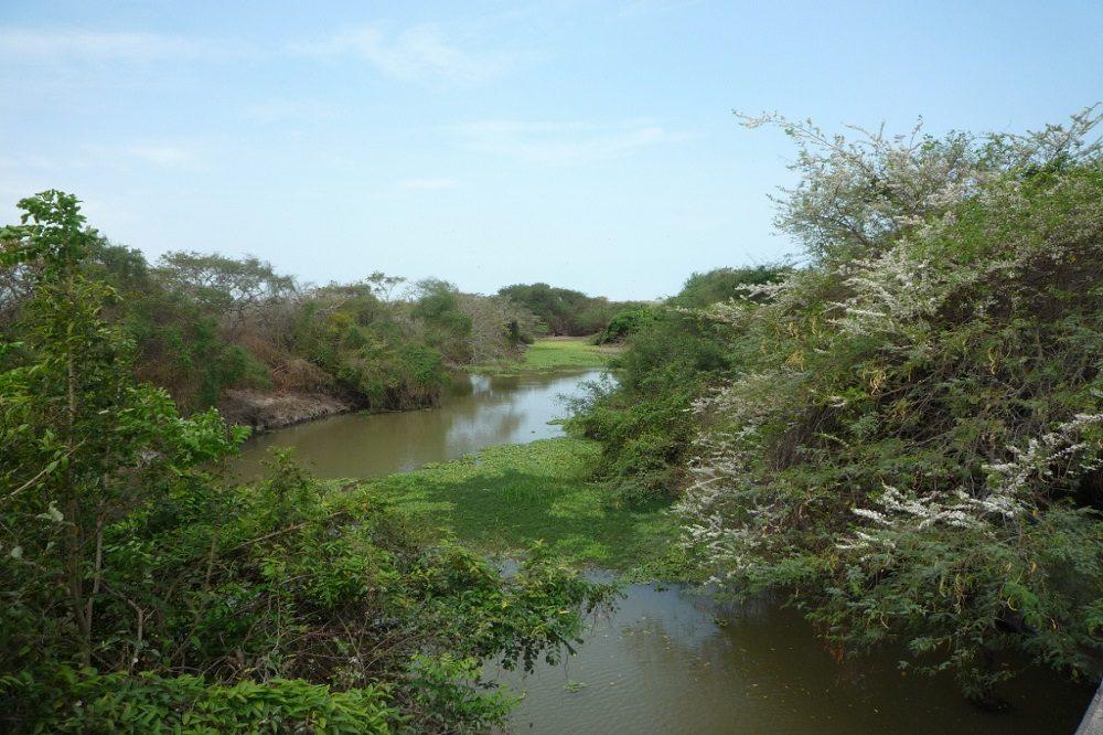 los flamencos reserve vogelreis colombia