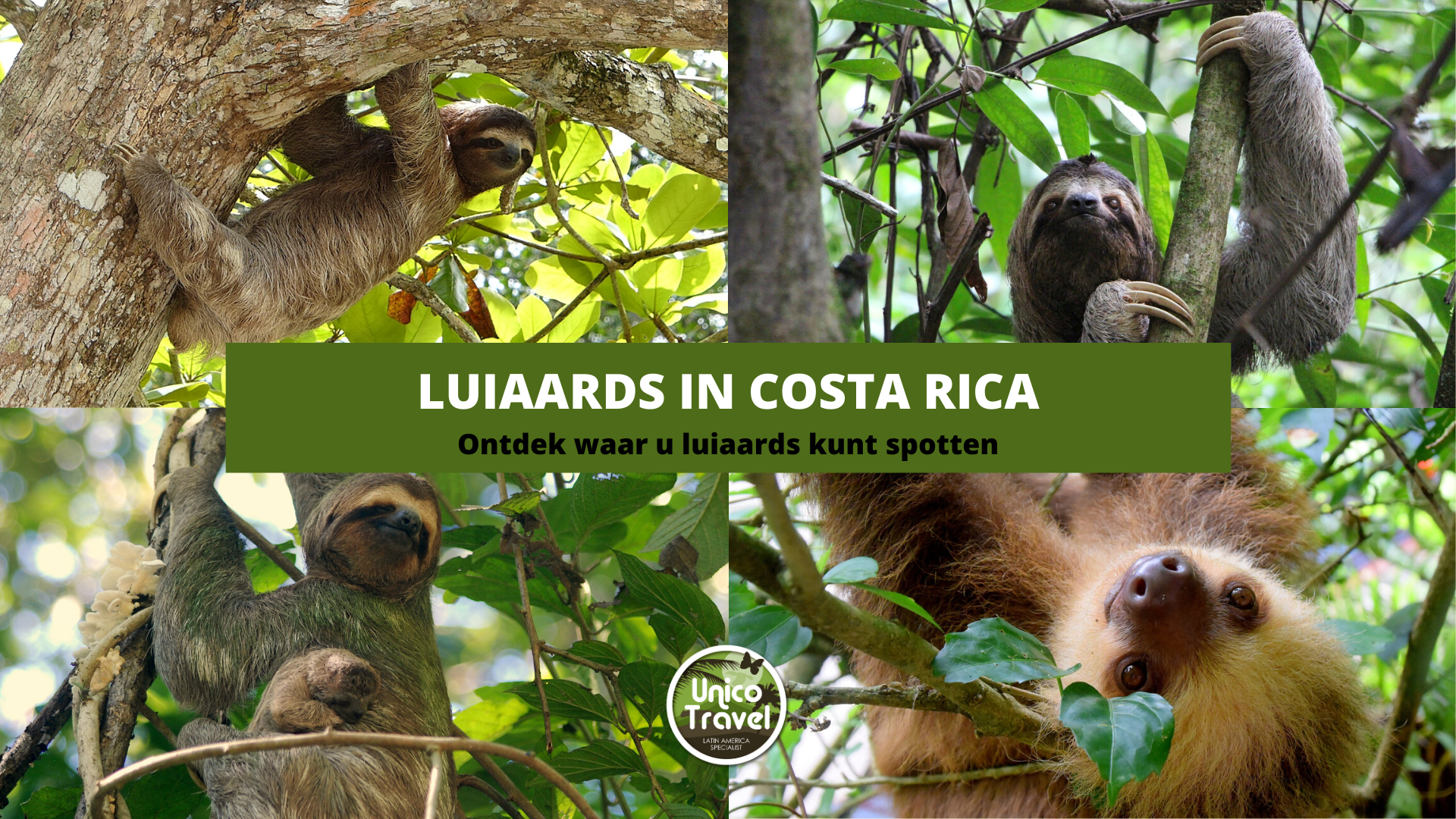 luiaards costa rica